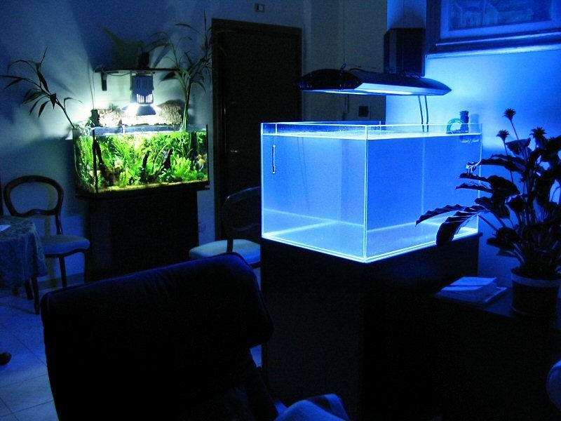 Il mio primo acquario marino: 2005-2007
