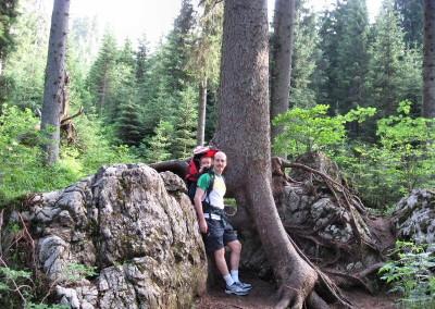 3405-alberi-montagna