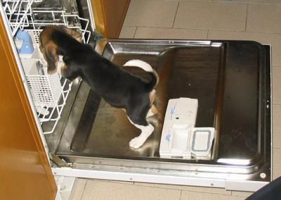 lavastoviglie-10_2004